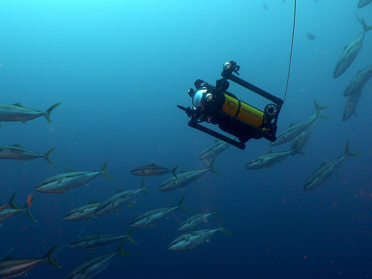 Boxfish Research, introduces its latest technological advancement in underwater filmmaking | The next-generation Boxfish cinematography drone delivers full-frame, 8K video from 1,000 meters depth