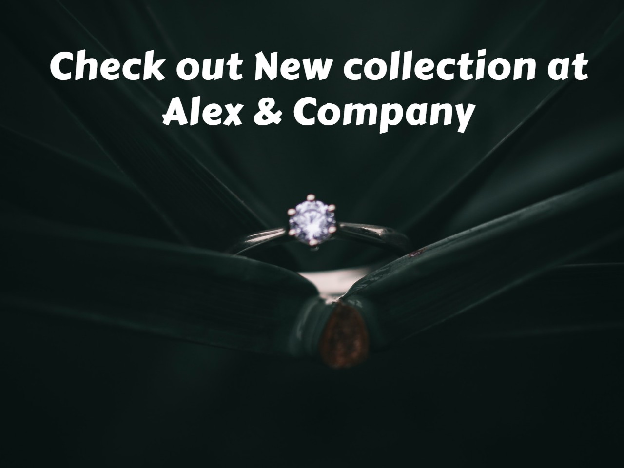Check out New collection at Alex & Company