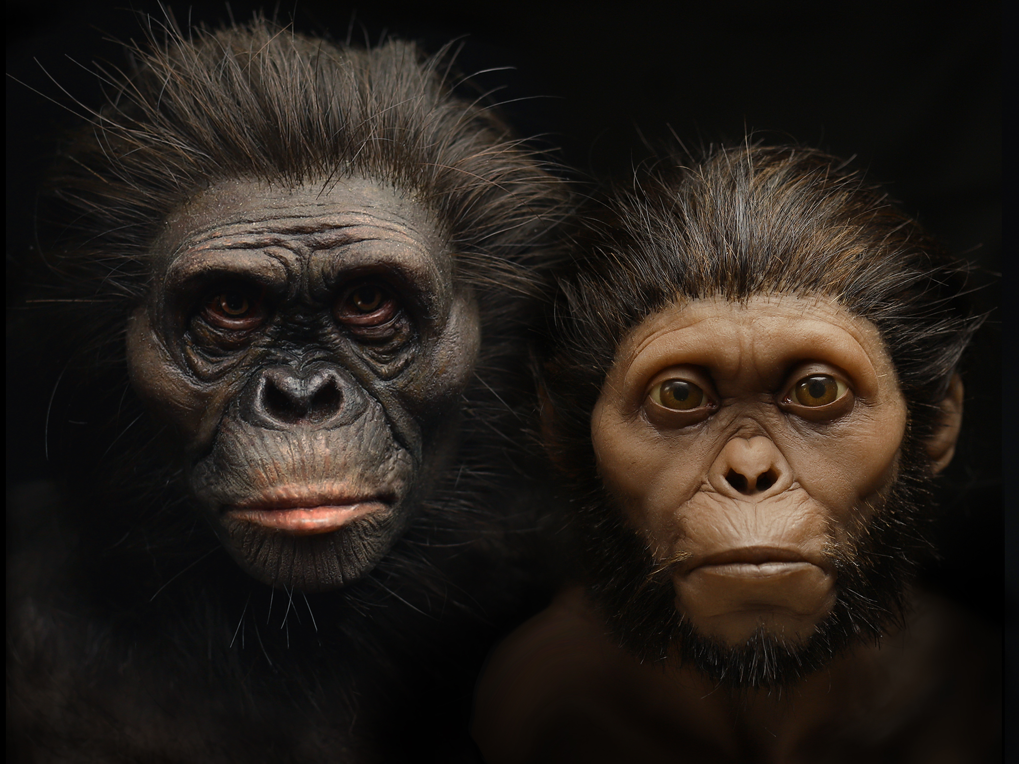 A New Picture of Human Evolution