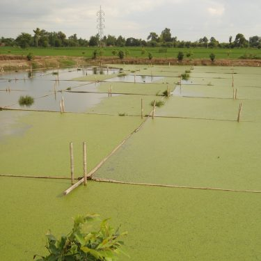 The Importance of Environmental Resource Management