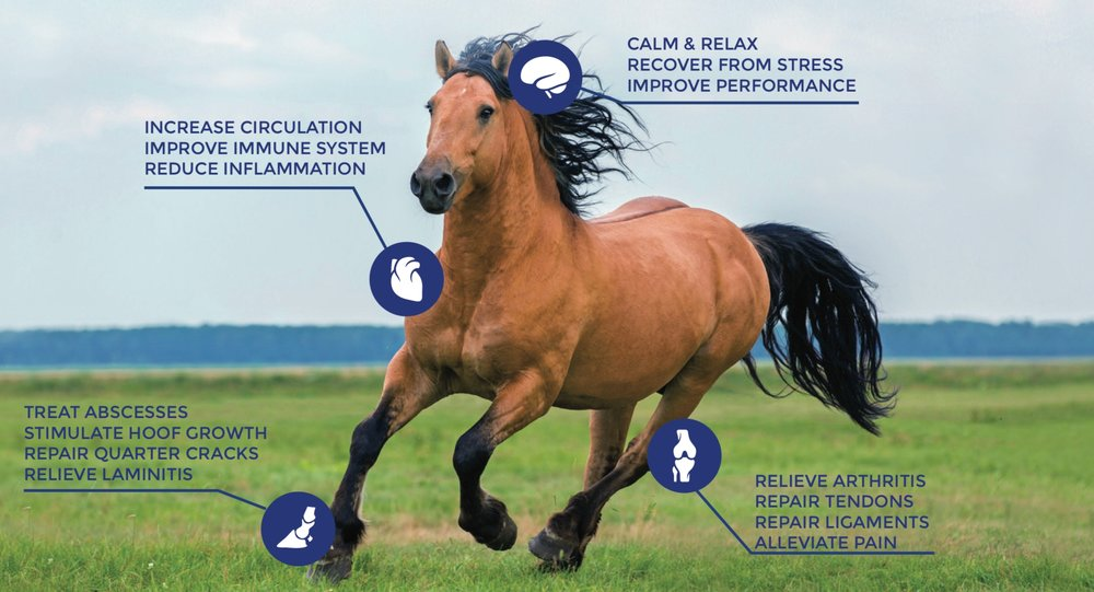 RedHealth Wearable Equine PEMF Devices - PEMF Therapy For Horses