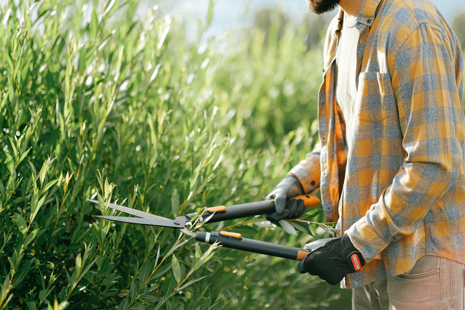 Brighton Gardening Services Announces Exclusive Subscription Lawn Care Services in the Brighton, UK Area