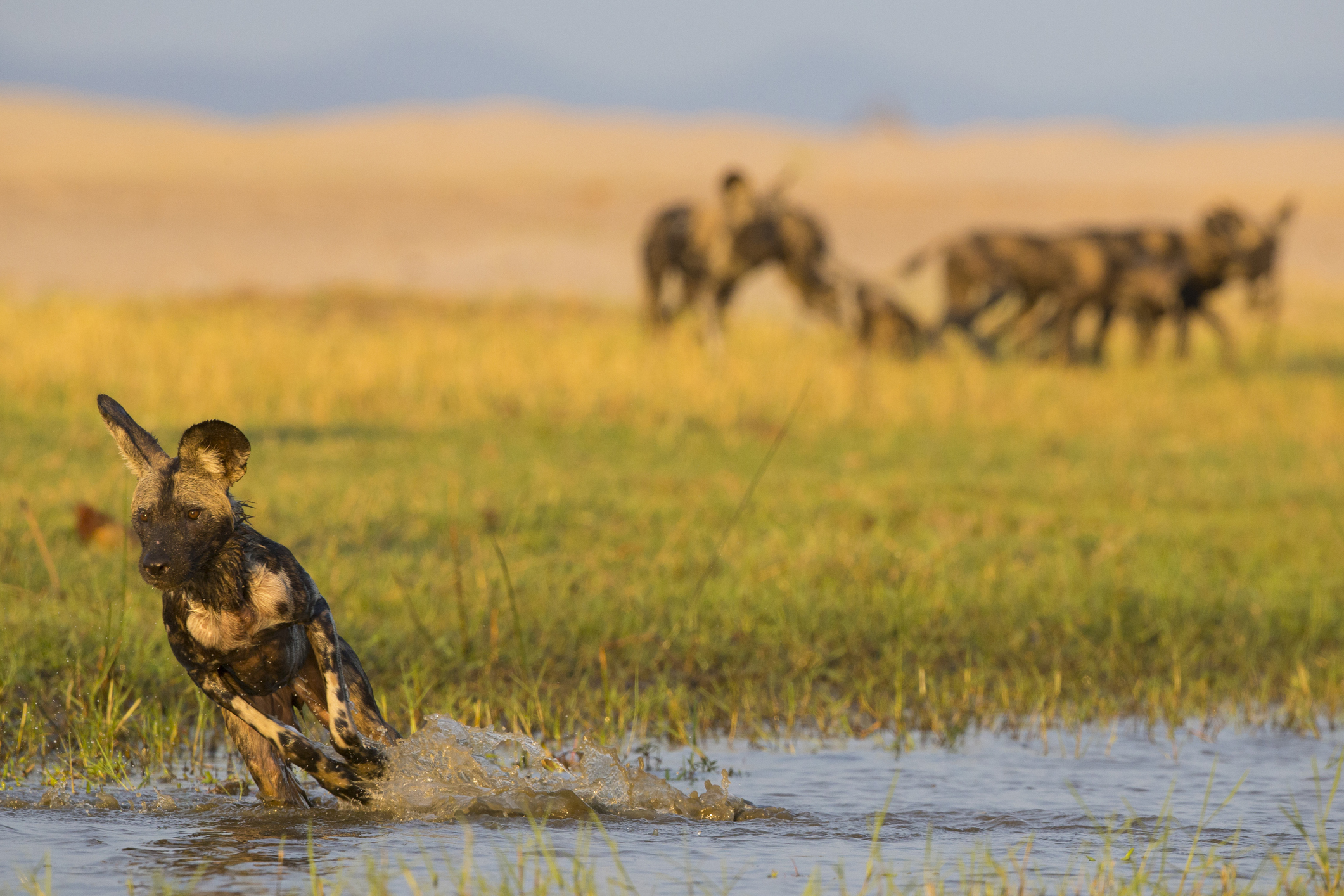 NU Borders' BITE Platform uses Advanced Analytics to Support Anti-Poaching in Southern Africa