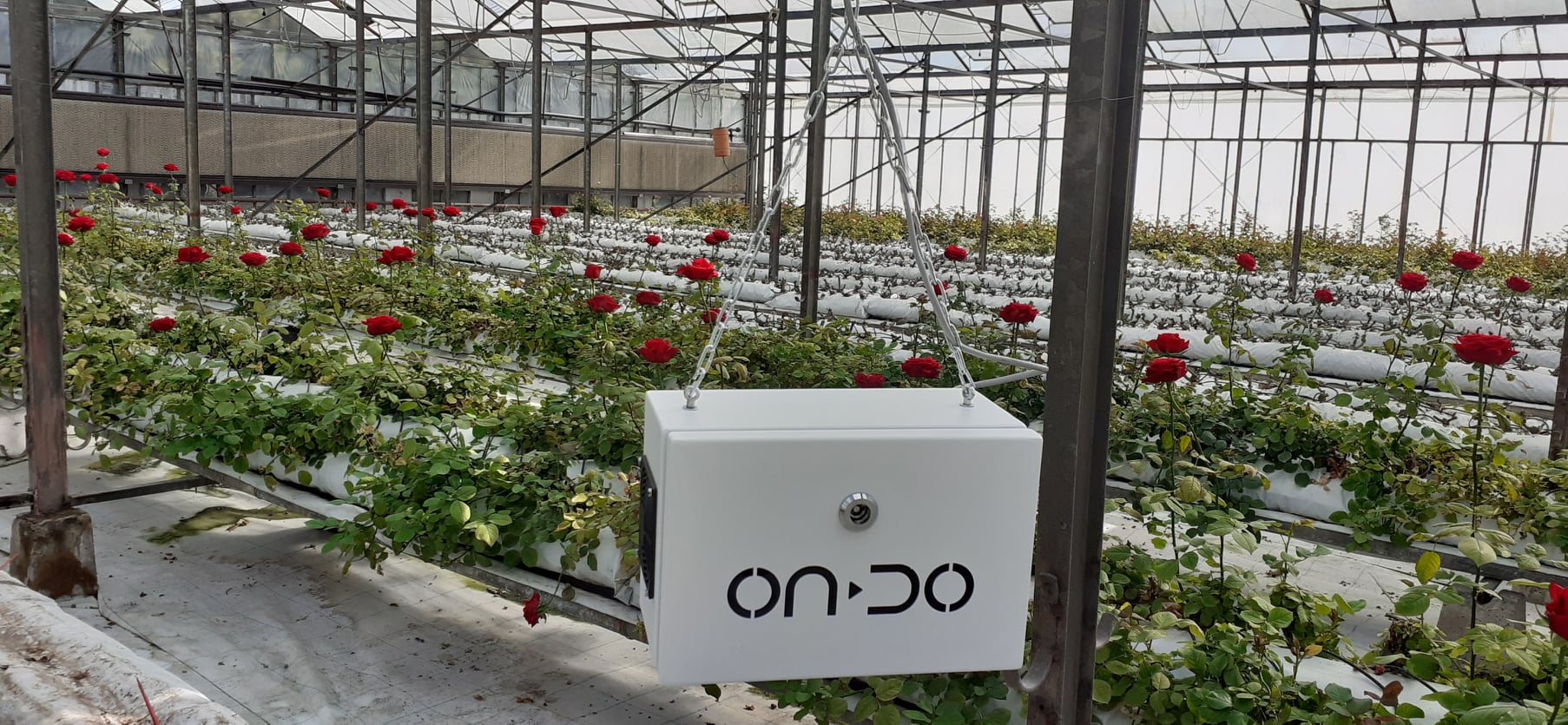 ONDO Smart Farming Solutions shares first customer results in a case study for Roseland customer