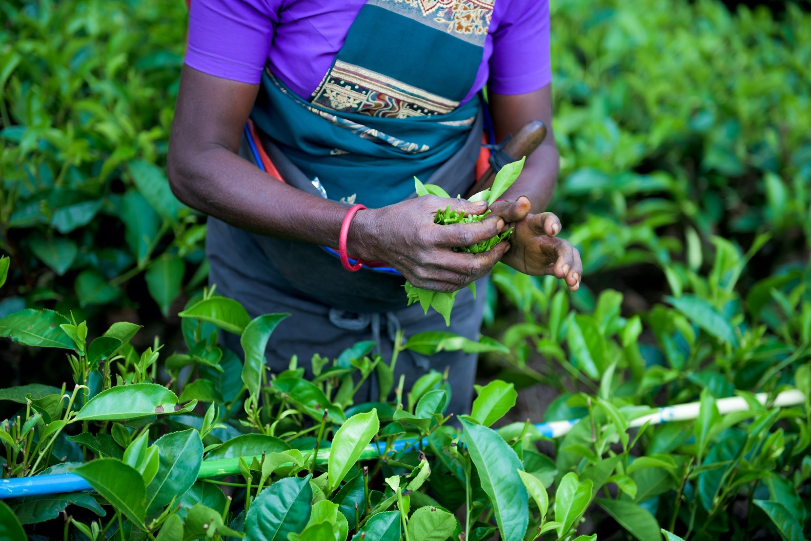 Livelihoods of Farmers in Developing Countries are at Risk