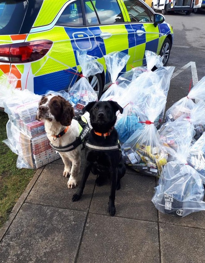 Wagtail UK Expands Training School with Launch of Tobacco Detection Dog Handler Course