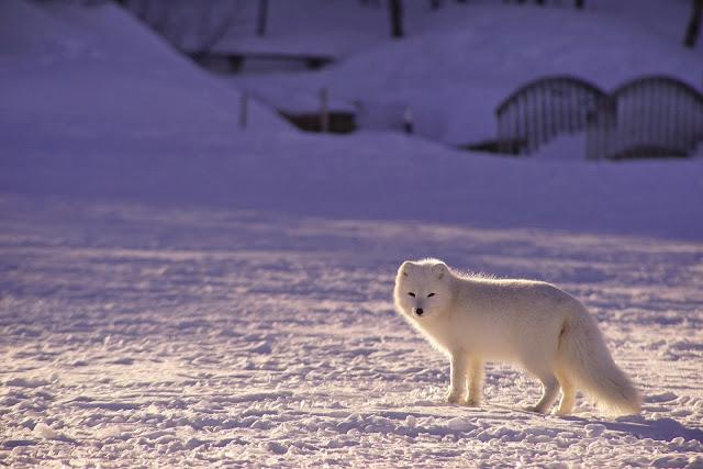 GEOPOLITICS: The Three Levels of Geopolitics in the Arctic - Analysis